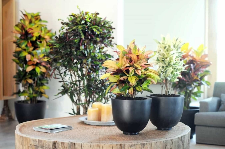 5 Indoor plants for low light spaces2